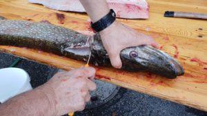 2. Vereinsfischen